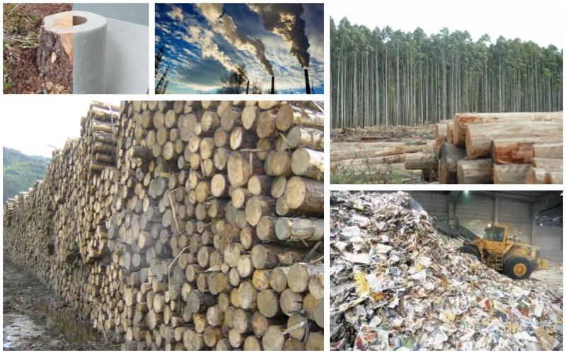 Por qué el papel contamina si es biodegradable